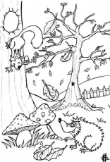 Rainforest Coloring Pages for Kids Collection | Printable Coloring