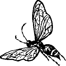 OUTLINE, DRAWING, BEE, BUG, FLY, WASP, INSECT, COLORING - Public