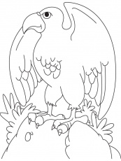Eagle color page | Coloring Pages