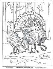 Birds Book Two Coloring Pages | Animal Coloring Pages for Kids