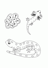 Free Life Cycle Coloring Pages StuwahaCreations 269503 Life Cycle