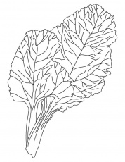 Leafy vegetable coloring pages, Kids Coloring pages, Free