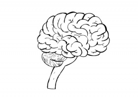 coloring pages of the brain