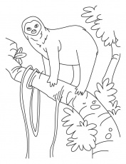 Sloth a slowest animal on Earth coloring pages | Download Free