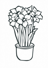 New Tropical Flower Coloring Pages Lrg | Laptopezine.