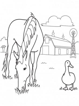 Fanimage  Blackhorsebeth  Horse Couple Blank Render  Coloring Home