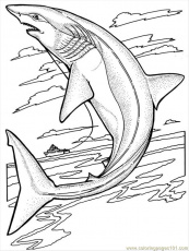 Coloring Pages Sharks (Fish > Shark) - free printable coloring