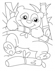 Cute panda coloring pages - ColoringStar
