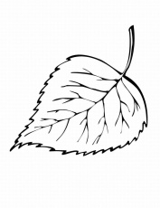 Fall Leaves Coloring Pages for Pinterest