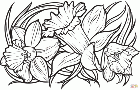 Daffodil coloring page | Free Printable Coloring Pages