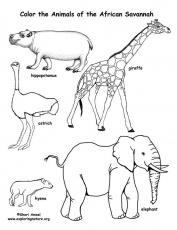 Savanna (African) Animals Coloring Page -- Exploring Nature