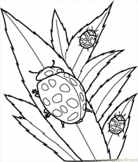 bug coloring pages for kids