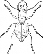 bug outline coloring page