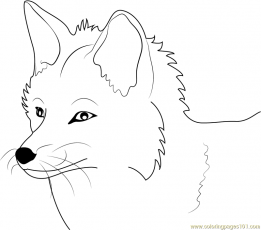 8 Pics Of Cute Baby Fox Coloring Pages How To Draw Anime Animals
