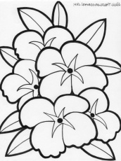 Free Coloring Pages Of Hawaiian Flowers | Coloring Online