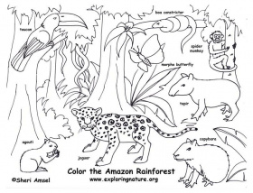 Rain Forest Animals - Coloring Pages for Kids and for Adults