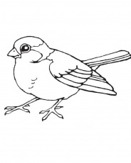 Robin Coloring Pages - Best Coloring Pages For Kids | Bird drawings, Bird  coloring pages, Animal coloring pages