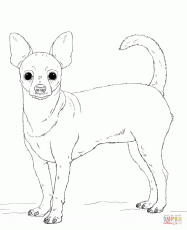 Pomeranian Puppy Coloring Page | Free Printable Coloring Pages ...