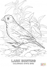 Arizona State Bird Coloring Page  Free Printable Coloring Pages