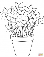Daffodils coloring page | Free Printable Coloring Pages