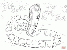 realistic king cobra coloring page free printable coloring pages
