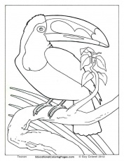 realistic coloring pages | Animal Coloring Pages for Kids