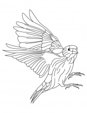 Finches flying coloring page download free finches for Finch coloring page