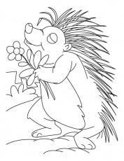 Flower coloring pages coloring home for Porcupine coloring page