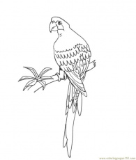 Coloring Pages Parrot (Birds > Parrots) - free printable coloring