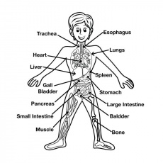 bodyparts.jpg (1500×1500) | Coloring pages