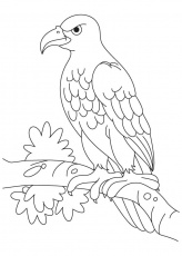 Eagle coloring page | Coloring Pages