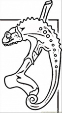 Coloring Pages Lizard From Madagascar (Countries > Africa) - free